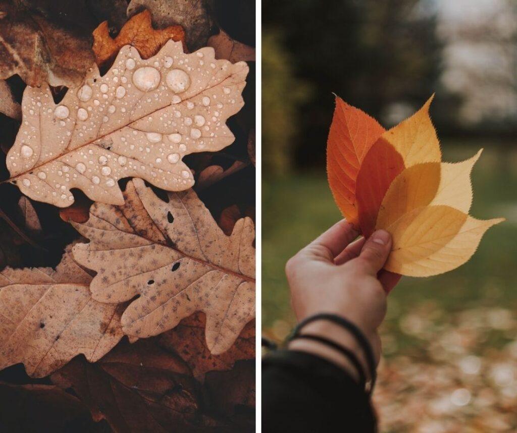 scattare-foto-in-autunno-foglie-01
