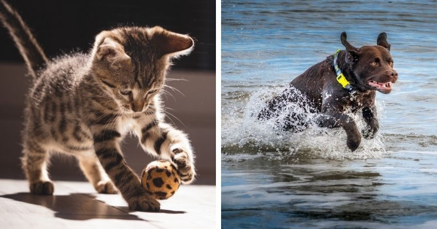 fotografare-animali-cani-e-gatti