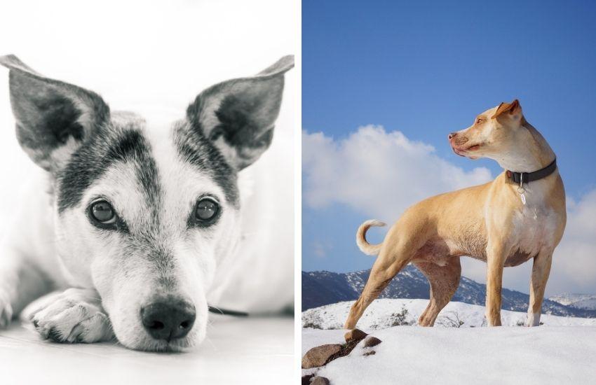 fotografare-animali-cani