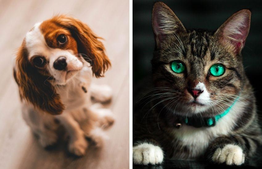 fotografare-animali