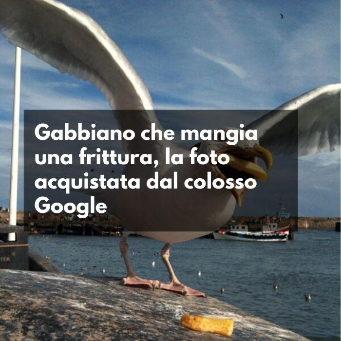 google-gabbiano